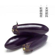 田间美物供港蔬菜(满89免运费) 紫茄  230g