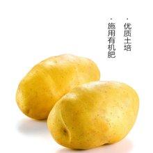 田间美物供港蔬菜(满89免运费)  马铃薯  500g