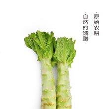 田间美物供港蔬菜(满89免运费) 莴笋 600g