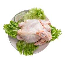 【领券满99元减30元】山东散养农家鸡800g  调味整只去内脏火锅生鸡肉农家土鸡