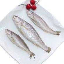 【赞赞渔】西非进口小赤鮸500g冷冻赤嘴敏鱼野生米鱼水产鳌鱼速冻鮸鱼