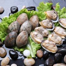 北洋海产 文蛤