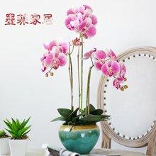 墨菲欧式陶瓷花瓶美式蝴蝶兰仿真花艺套装客厅样板房家居装饰摆件