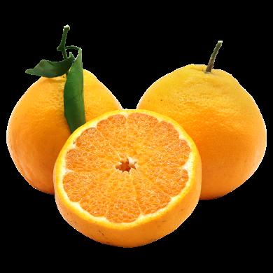 【现摘?#22336;?新鲜味美?#20811;?#24029;柑橘 不知火耙耙柑5斤装 新鲜水果