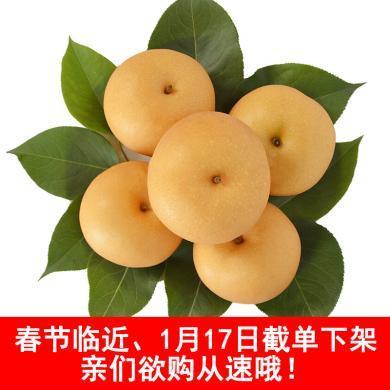 華樸上品 山東秋月梨4.5-5斤裝中果5-9個梨子 新鮮水果梨子