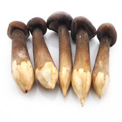亦見 新鮮黑牛肝菌 菌菇食材 順豐包郵 500G