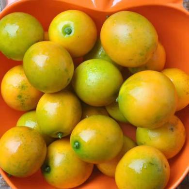 華樸上品 廣西融安滑皮金桔新鮮水果桔子