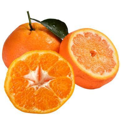 華樸上品 四川春見耙耙柑 新鮮水果柑橘子