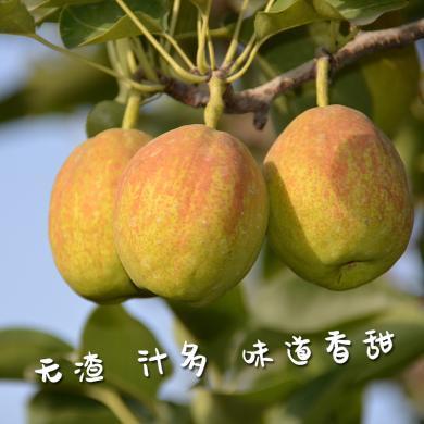 【京東快遞】 新疆 庫爾勒 香梨 8斤裝國產新鮮 水果