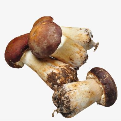 亦見 新鮮姬松茸 巴西球蓋菇 500g