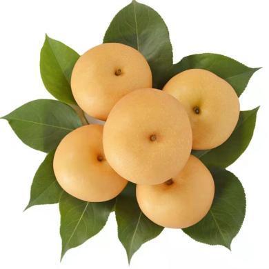 华朴上品 ?#34121;?#31179;月梨4.5-5斤装中果7-9个梨子 新鲜水果梨子