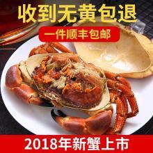 英国面包蟹 鲜活即食熟冻1600-1300克/两只面包螃蟹发财蟹黄金蟹