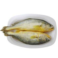 北洋海产 三去大黄鱼 500g