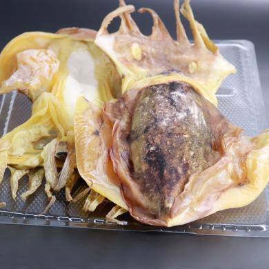 北海墨魚干500g烏賊干貨大號目魚干海產品特海鮮級干貨