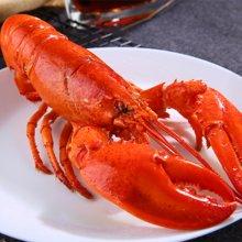 加拿大深海熟冻波士顿龙虾冷冻鲜活波斯顿龙虾400-300克/只*2只