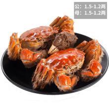 【共16只】大閘蟹鮮活現貨六月黃特大公母蟹香辣大蟹活蟹鮮活螃蟹