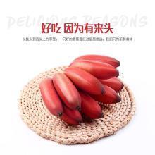 【新品上市】紅皮香蕉 5斤裝美人蕉 新鮮水果 孕婦寶寶當季營養水果 香甜可口