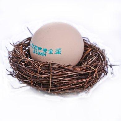 晉龍初產蛋 16枚裝 包郵  當天現產現發