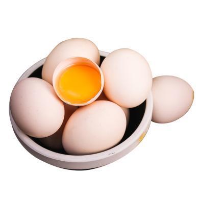 谷物喂養 原色營養 新鮮直達 鳳柏林谷物蛋30枚鮮雞蛋
