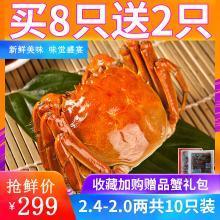 【買8送2】大閘蟹鮮活六月黃現貨特大螃蟹公母蟹共10只裝