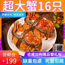 【搶16只】現貨大閘蟹鮮活六月黃特大新鮮螃蟹全公母大閘蟹禮盒裝