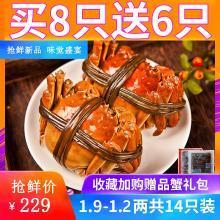【買8送6】大閘蟹鮮活六月黃現貨螃蟹公母蟹隨機共14只裝