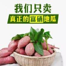 【长寿地瓜 】海南桥头富硒长寿地瓜5斤装大果 【单果约350g以上】  红薯