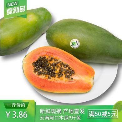食王記  云南河口木瓜 紅心木瓜非海南紅心木瓜凈重 9斤 6個左右