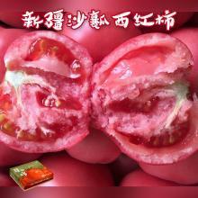 【新疆特產】新疆沙瓤西紅柿 產地直供 5斤裝