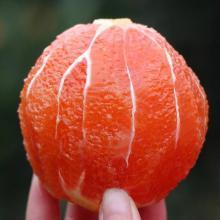 华朴上品 赣州 红肉橙血橙10斤装大果80-95mm 新鲜水果橙子