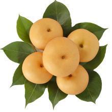 华朴上品 山东秋月梨 4.5-5斤装 中果7-9个 新鲜水果梨子