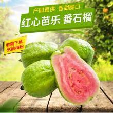 食王记 广西红心芭乐5斤番石榴新鲜水果现摘现发