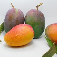 华朴上品 芒果攀枝花爱文芒果 8斤装16-18个左右 新鲜芒果
