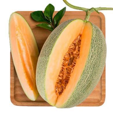 HUAPU 山東西周蜜酥蜜瓜4.5-7斤可選 新鮮水果蜜瓜產地直發