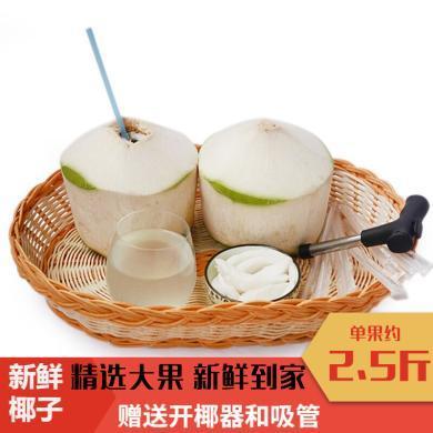 海南椰子大果9個裝應當季熱帶孕婦水果特產新鮮現摘現發椰青水