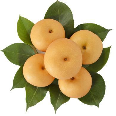 华朴上品 ?#34121;?#31179;月梨 4.5斤6个精品大果天地盖礼盒装 新鲜水果梨子