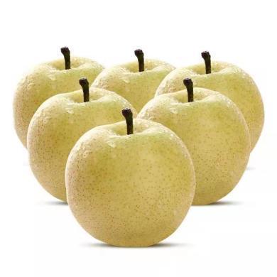 華樸上品 河南博望黃金梨 5斤裝10-12個梨子  新鮮水果梨子