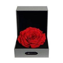 经典红----红色永生玫瑰:厄瓜多尔进口巨型玫瑰