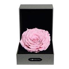经典粉----粉色永生玫瑰:厄瓜多尔进口巨型玫瑰