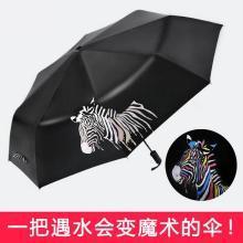 【遇水变色】2019新款斑马伞晴雨两用伞黑胶遮阳伞太阳伞F1007